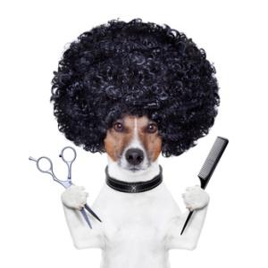 Fellpflege für Hunde ist für alle Rassen wichtig, damit das Fell richtig