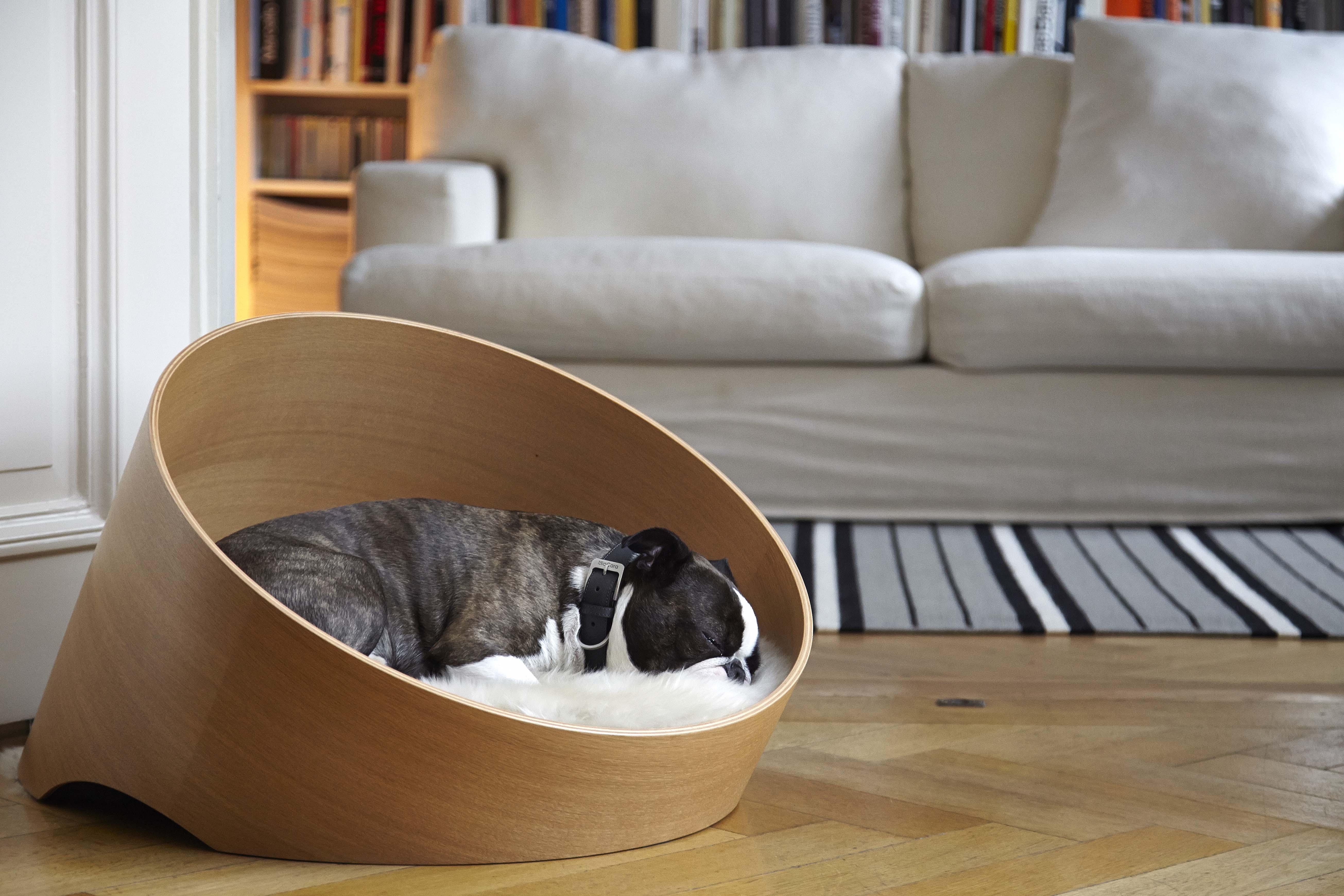 Creative Dog Beds