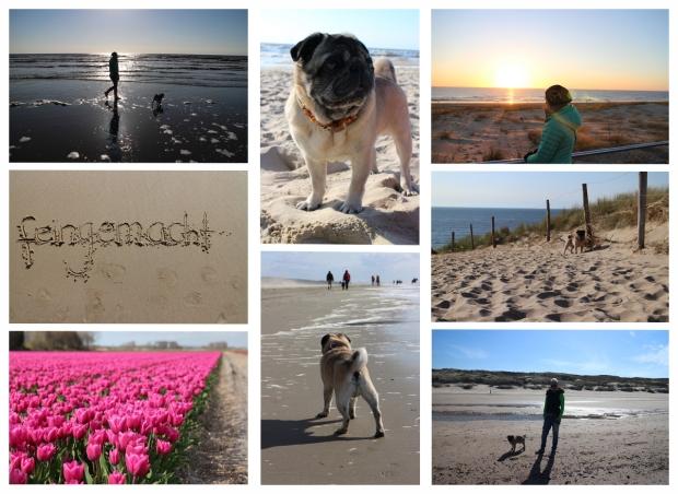 Egmond aan Zee - Urlaub mit Hund am Meer